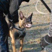 Schnegge Feb. 2012: Schutzdienst
